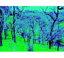 Landscape With Spanish Moss Photographic Print
