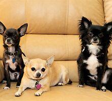 My little friends by ZeeZeeshots