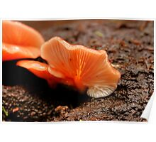 Earthy Apricot Fungi Poster