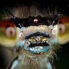 Damselfly Portrait by Ian Chapman