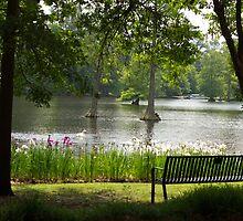 Swan Lake by Debbie Moore