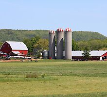 Big Dairy Farm by HALIFAXPHOTO