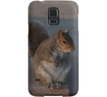 Urban Gray Squirrel Samsung Galaxy Case/Skin