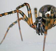 Hello Mr Spider by Ian Chapman