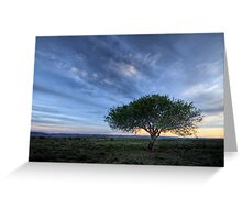 Wild Plum Tree at Sunset Greeting Card