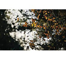 Last days of Autumn Photographic Print