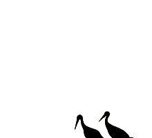Zen by TaniaLosada