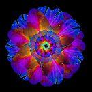 Rainbow Flower by LisaRoberts