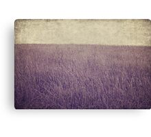 Purple field Canvas Print