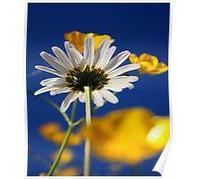 Summer Daisy Poster