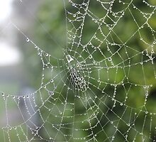 Dew Covered Web by Vicki Spindler (VHS Photography)