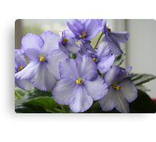 Lavendar African Violets Canvas Print