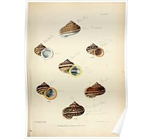 Conchologia indica Sylvanus Charles Horp Hanly and William Theobald 1876 Plate 0048 Poster