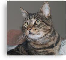 Jimmy-my Tabby Cat Canvas Print