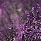 Purple by Anne Staub