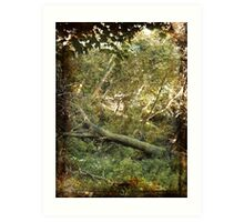 when a tree falls in the forest does it make a sound ? Art Print