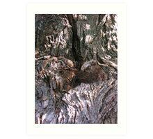 old bark'er Art Print