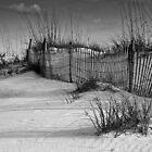 Sand Dunes, Anastasia State Park, Florida by Tomas Abreu