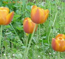 Tulips In The Wind by Bea Godbee