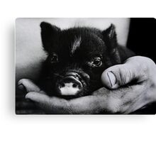 """""""Piglet in Palm"""" Canvas Print"""