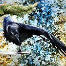 Dancing Raven by Kay Kempton Raade