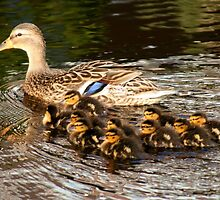 Mom Duck & Ten Ducklings by Jo Nijenhuis
