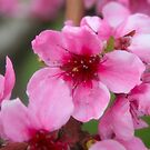 Pink Blossoms by Tiffany Vest