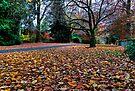 Autumn Mt Mount Wilson | NSW | The Blue Mountains | Australia by DavidIori