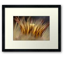 crown of thorns... Framed Print