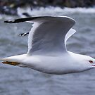 Seagull FlyBy by WolfPause