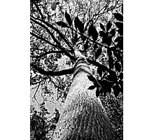 Upward Bound B&W Photographic Print