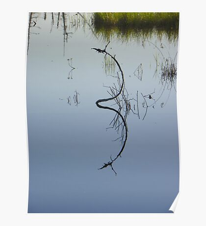Reflections in a Swamp Poster