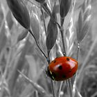 ladybug in the grass by tego53