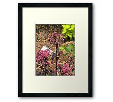 Purple Emperor Framed Print