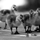 You know they are cute. by Erik Anderson