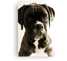 Luthien's Portrait In Sepia -Boxer Dogs Series- Canvas Print