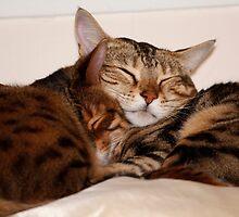 Snuggle by Sandra Chung