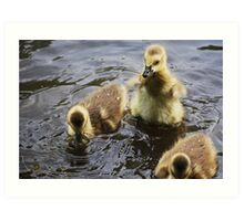 Gosling 'fans' it's wings... Art Print
