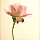 Lovely  by Valerie Rosen