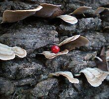 Red Spot by Jeffri