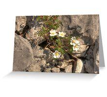 Burnet Roses Greeting Card