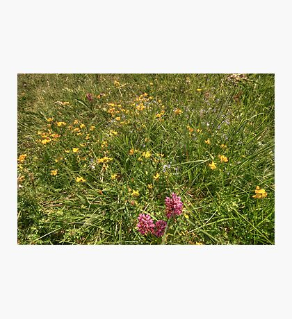 Burren Flowers Photographic Print