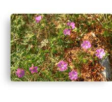 Beautiful Burren Flowers Canvas Print