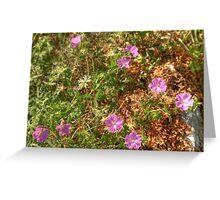 Beautiful Burren Flowers Greeting Card