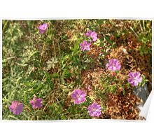 Beautiful Burren Flowers Poster