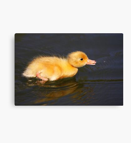 Hunt On A Fly Canvas Print