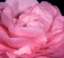 Pinky by Luca Renoldi