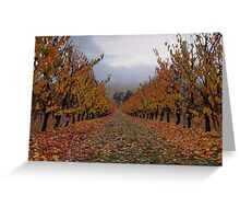 Autumn Apricots Greeting Card