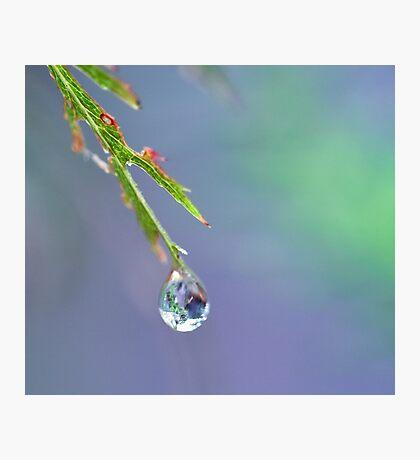 Zen Droplet Photographic Print