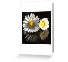 daisy pair reflected on black Greeting Card